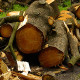 gestione boschi legna